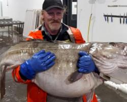 В норвегии поймана очередная рыба-мутант